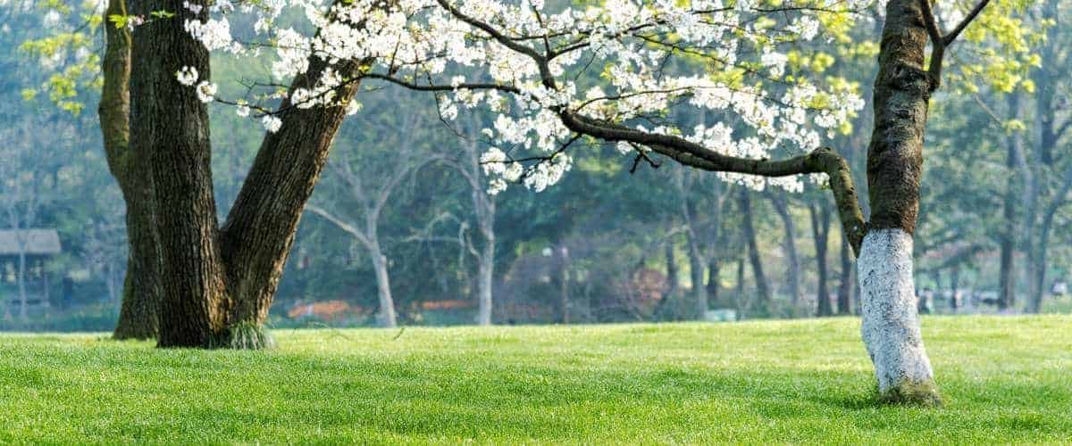 Da non perdere a Bologna: parchi e tanto verde!