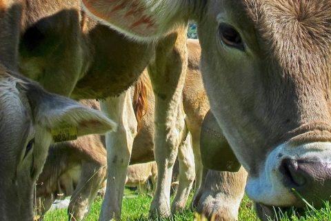 fiera-agricola-pastorano